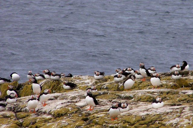 farne-islands